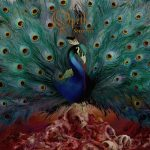 Cover - Opeth – Sorceress